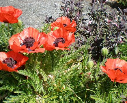 Flower Garden Warren Farm Cottages Wexfod