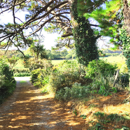 Granary Cottage Driveway
